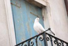 jak odstraszyć gołębie