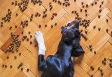Gdzie kupować żywność i akcesoria dla zwierząt