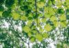 Czym wyróżniają się ekologiczne środki czystości